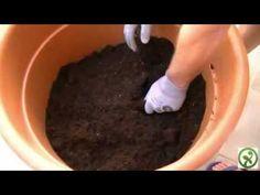 Cultivo y comercialización del aguacate en clima cálido