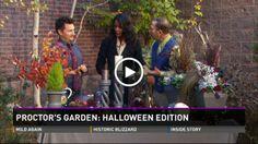 197 Best Colorado Gardening images in 2013 | Aspen colorado