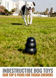 Indestructible Dog Toys: Our Top 7 Picks for Tough Chewers.