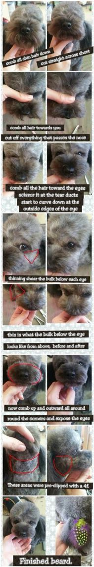 -repinned- Step by step Asian inspired dog grooming.