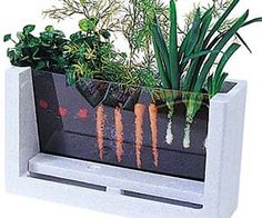 Experience the joy of watching your vegetables grow with this viewable root garden. This kid friendly kit includes everything you need to plant and observe the...