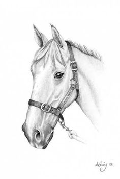 horse drawing pencil easy drawings nature horses draw thewhitestyle ru animal painting