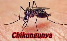 Febre de Chikungunya : Causas, Sintomas, Tratamento e Prevenção