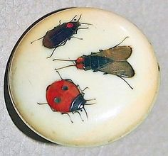 Antique Buttons With Rare Metal Insects in Ivory Shibayama