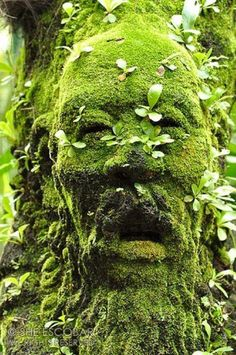 The Green Man Singapore Botanical Garden A figure of a man's head covered with moss and plants at The Mist House. The Green Man Singapore Botanical Garden A figure of a man's head covered with moss and plants at The Mist House. Plantation, Green Man, Dream Garden, Yard Art, Shades Of Green, Garden Inspiration, Botanical Gardens, Garden Design, Scenery