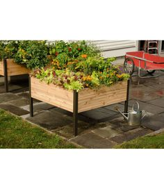 Add some functionality to your outdoor vegetable garden with this Cedar Elevated Planter Box, the perfect medium to maximize your vegetable yield Elevated Planter Box, Planter Bench, Cedar Planter Box, Planter Boxes, Tall Planters, Outdoor Planters, Garden Planters, Garden Soil, Garden Boxes