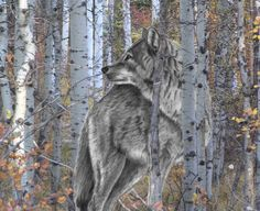 drawing of wolf with blue eyes and birches | Not To Be Tamed, Birches, Free, Lone, Spirited, Wild, Wolf, Woods