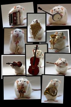 Mouse orchestra- makes me laugh every time!!!