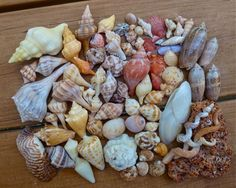 Seashell finds Sanibel September