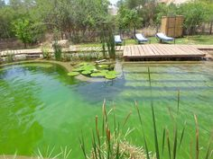Natural pools Natural Swimming Ponds, Natural Pond, Swimming Pools Backyard, Ponds Backyard, Pond Water Features, Dream Pools, Cool Pools, Pool Houses, Pool Designs