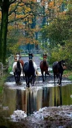 Horse Photos, Horse Pictures, Animal Pictures, All The Pretty Horses, Beautiful Horses, Animals Beautiful, Nature Animals, Animals And Pets, Cute Animals