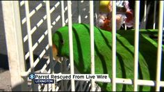 Exotic bird rescued after spending days on live wire