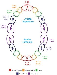 Teething Chart… Good to know. Teething Chart… Good to know. Baby Teething Schedule, Baby Teething Chart, Baby Teething Remedies, Baby Schedule, Teething At 4 Months, 8 Month Old Schedule, Sleep Schedule, Baby Development, 16 Month Old Development