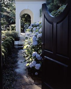 A gate into a garden room with hydrangeas in full bloom.Ward A Lile Design Garden Pool, Garden Landscaping, Resident Evil, Dream Garden, Home And Garden, Hydrangea Garden, Hydrangeas, Blue Hydrangea, Side Gates