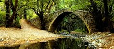 erdő, híd, patak, kő