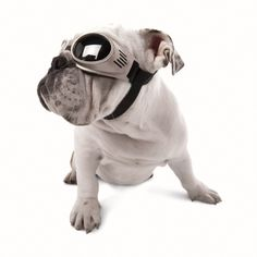 Doggles Originalz - Doggy GogglesEver since I first saw a little canine head with goggles on poking out the backpack of a motorcycle…View Post All Dogs, Best Dogs, Your Best Friend, Best Friends, Dog Goggles, Dog Eyes, Dog Accessories, Dog Life, Your Pet