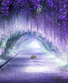 Japan is well known for its cherry blossom trees, but that's not all Parks around the country have created beautiful wisteria tree tunnels all can enjoy. Japan's Wisteria Tree Tunnels Look Like They're Straight Out of a Fairy Tale Beautiful Nature Wallpaper, Beautiful Landscapes, Beautiful Gardens, Beautiful Scenery, Beautiful Moments, Beautiful Places, Wisteria Garden, Wisteria Tree, Wisteria Tunnel Japan