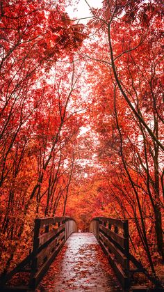travelandseetheworld: Into The Fall - bridge to a red autumn forest - photography by Emmanuel Coveney Beautiful World, Beautiful Places, Beautiful Pictures, Beautiful Models, Wonderful Places, Autumn Forest, Autumn Trees, Autumn Fall, Autumn Leaves