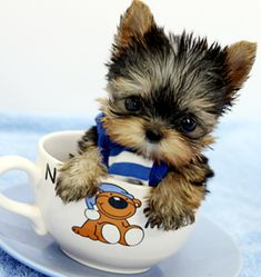5 Smallest Puppies You have Ever Seen #yorkshireterrier