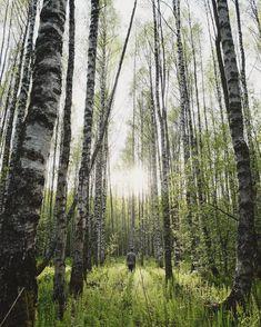 """Finnish nature 👌🏻 #kuopio"" Study Abroad, Landscape, Nature, Summer, Beautiful, Finland, Scenery, Naturaleza, Summer Time"