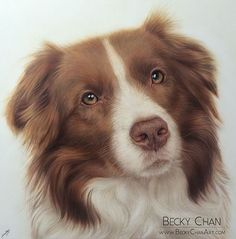 Becky Chan - aibrush Pet Portrait of Red Border Collie