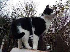 ZooZoo - Pepe és Lili - macska - keverék házimacska