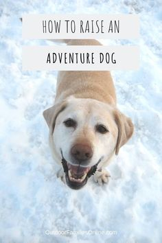 Advice from adventure dog owner John Soltys who has dedicated his life to getting dogs adventuring safely. Read 4 expert tips on raising an adventure dog. Girl Dog Names, Dog Enrichment, Dog Friendly Hotels, Hiking Dogs, Dog Safety, Pet Travel, Outdoor Dog, Girl And Dog, Family Dogs