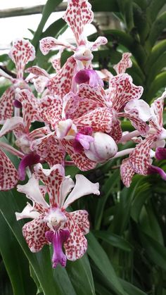 Orchids in the house