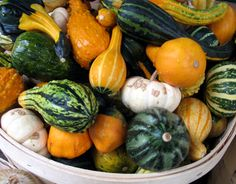 bushels of fall food