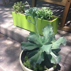 Loll Designs modern recycled Loll planter at Red Tile Studio in Dallas, TX. Made in the USA from recycled milk jugs! Outdoor Planter Boxes, Planters, Zucchini Plants, Fall Containers, Red Tiles, Milk Jugs, Small Plants, Gardening For Beginners, Container Gardening