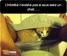 #cat #pet #humor #funny #chat #zoomalia http://www.zoomalia.com/