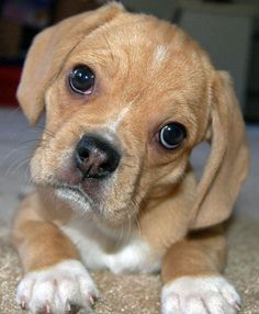 id like to see you try and say no to this face!