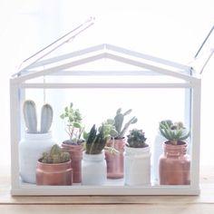 mini serre cactus / mini invernadero