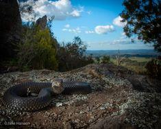 Meanwhile In Australia, Mountains, Nature, Travel, Animals, Naturaleza, Viajes, Animales, Animaux