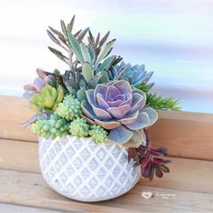 "1,344 Likes, 28 Comments - Andrea's Succs (@succulentfanatic) on Instagram: ""WHAT ARE THESE I NEED THEM IN MY LIFE IMMEDIATELY! Does anyone know what these are? Where can I…"""