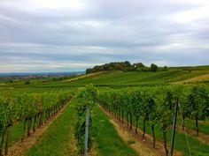 Austrian Landscape: vineyards between the towns of Baden bei Wien and Gumpoldskirchen in Lower Austria. #austria #landscape