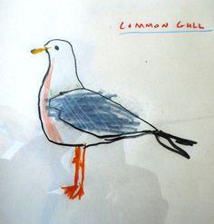 common gull by Robert Clarke