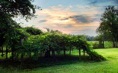 Nature Grape Garden
