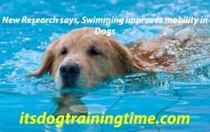 New Research says, Swimming improves mobility in Dogs  If your dog is suffering from a joint problem like arthritis, then you may be aware of the advantages swimming can offer to your dog. New research has discovered that swimming not only assists dogs with joint issues but it is also beneficial for all the dogs.