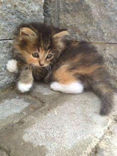 very nice kitty