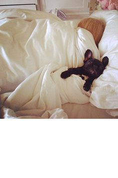 "See all the adorable pics of ""the most famous dog on the internet"" according to Karl Lagerfeld."
