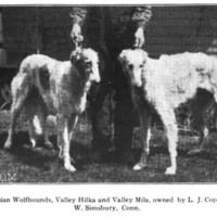 1907 Borzoi Valley Hilka' and 'Valley Mila
