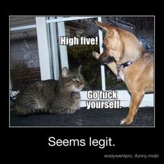 Ha Ha this so reminds me of my parents cat and dog....