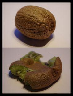 Mr. Greens Welt: Fruit Art - Kiwi