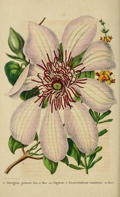 t.4 (1853-1854) - Belgique horticole. - Biodiversity Heritage Library