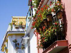 How to Grow a Balcony Garden: tips for turning a balcony into a botanical paradise.