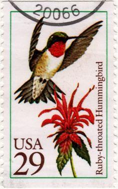Ruby-throated hummingbird, USA