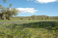 Eumelia Organic Agrotourism Farm & Guesthouse during Spring! Green & lush!