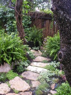 Stone path to woodland area shade garden