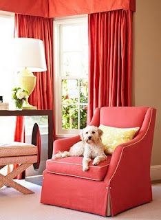 Cute dog on the chair